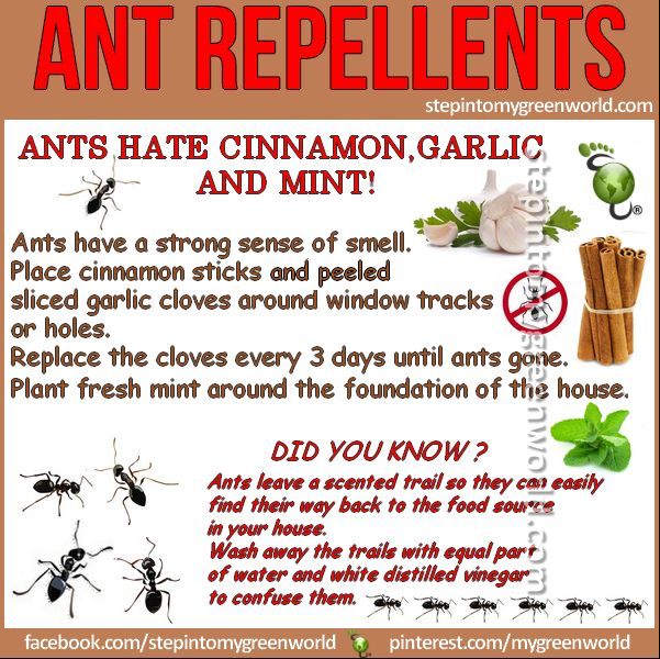 As the weather gets warmer, it brings little bugs with it. These are our favorite ant repellents. Ants hate cinnamon, garlic and mint! They have a strong sense of smell. Place cinnamon sticks and peeled and sliced garlic cloves around window tracks or holes in the house. Replace the cloves every 3 days …