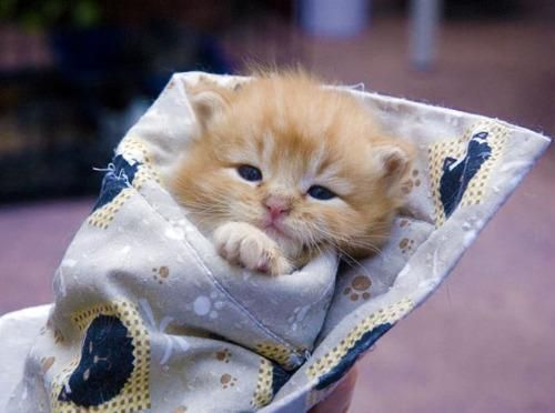 Sleepy Kitten - Funny Animal Pictures With Captions - Very Funny Cats - Cute Kitty Cat - Wild Animals - Dogs