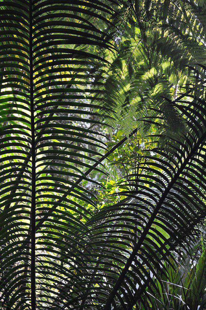 https://flic.kr/p/unUmjf   Australian National Botanic Gardens   Palms :: © Gabriella Tagliapietra / Pinch River