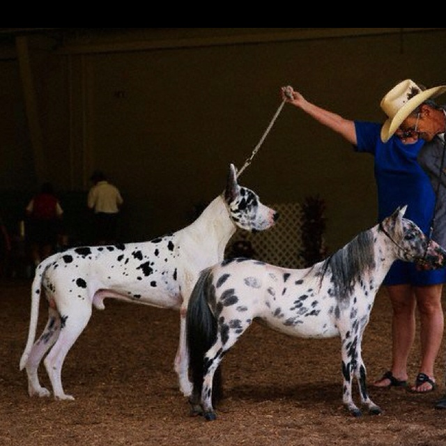 dogs vs horses for aat Visitation by a therapy animal or animal assisted therapy (aat) where animals  and their handlers work with human/health  the majority of visitation animals  are dogs, but some groups include  horses, and llamas finding a program to.