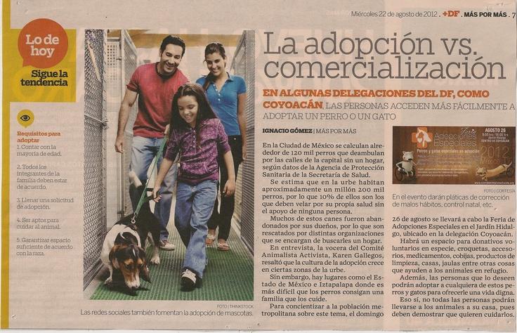 En algunas delegaciones del DF como Coyoacán, las personas acceden más facilmente a adoptar un perro o un gato.