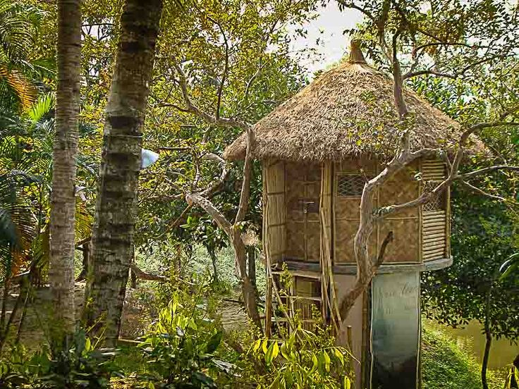 Visit mayapur treehouse in India ashram for westerners