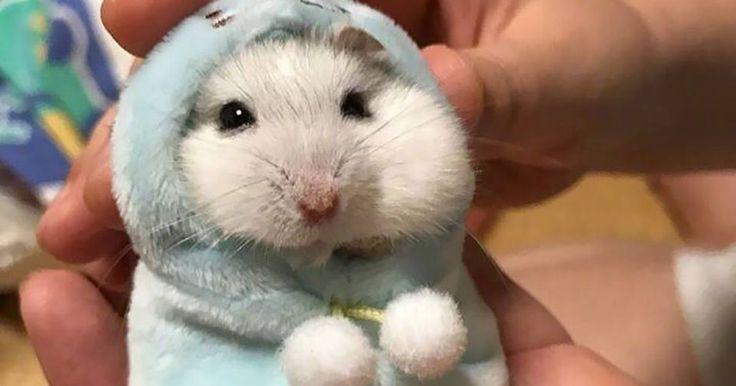 Actually too cute.