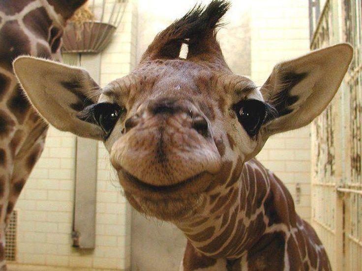 Smile! Diese Tiere haben gute Laune - Seite 1