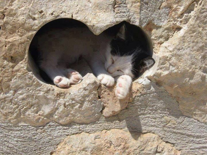 While on vacation in Greece, Mimi found the perfect, cat-sized napping spot. ~ Houston Foodlovers