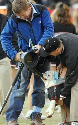 Georgia Bulldogs mascot Uga VI takes a bite out of a camera.