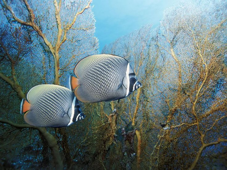 19 best under water images on pinterest marine life nature and posted by ach ta przyroda oh what a nature publicscrutiny Images