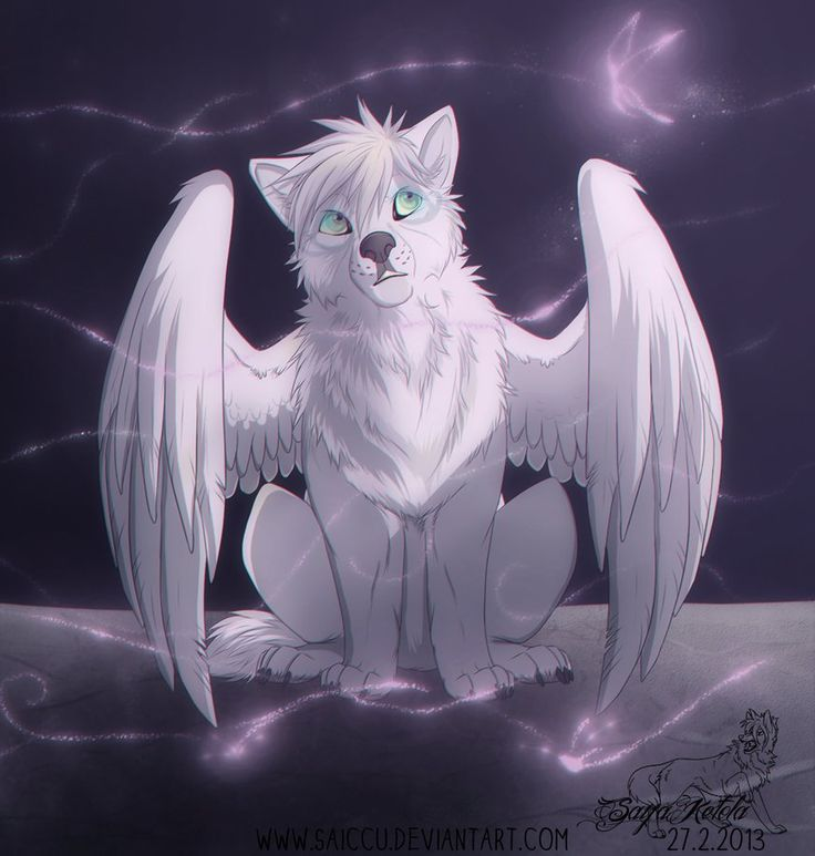 Белые волки с крыльями картинки
