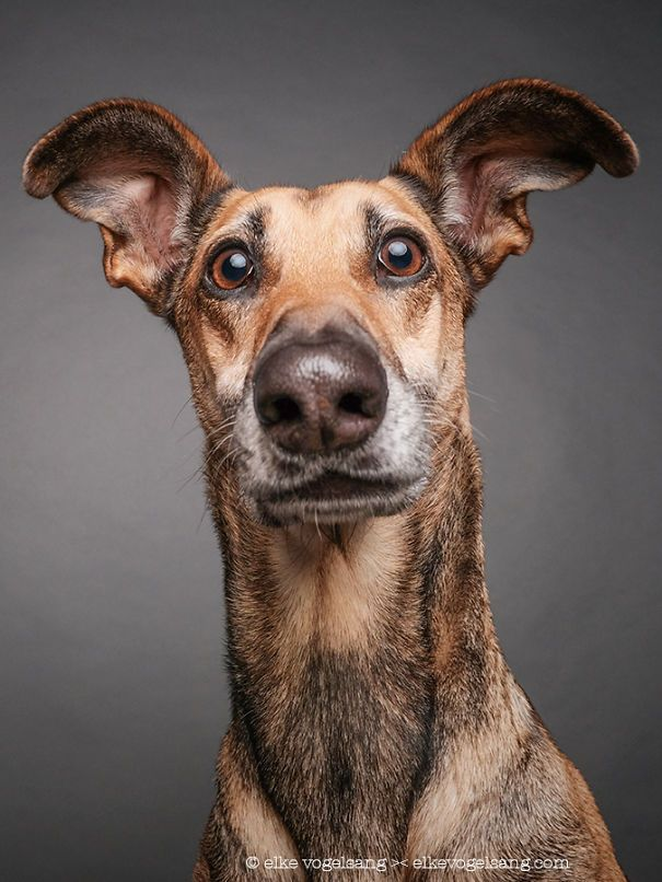 "German photographer Elke Vogelsang (aka Wieslblitz) has a knack for capturing expressive portraits of our canine friends. Last year, we shared their goofy personalities in a series of delightful images. Now, Vogelsang has pivoted from their playfulness and explores pups' skeptical side. Her latest series features ""dogs questioning the photographer's sanity,"" as they grimace, roll their eyes, and generally look miffed. We can't help think we've done something wrong! These canines weren't…"