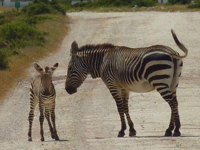 De Hoop Nature Reserve, South Africa