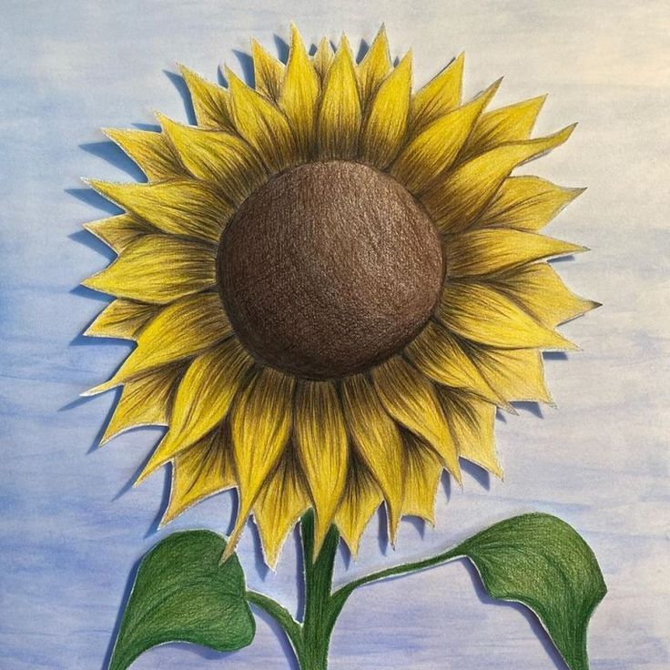 Drawing Sunflowers Watercolor 21 30 Cm Drawing Sunflowers