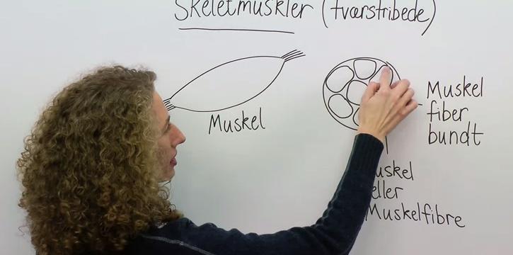 Frividen.dk – et gratis e-læringsmekka for studerende  FriViden lægger vejledende løsninger ud på gamle eksamensæt. Det gør de for at give alle en lige chance, uanset om man kan få hjælp derhjemme, for at regne opgaver, få hjælp i løsningen når man går i stå, komme videre og dermed få opgavetræning og blive bedre.  Der tilbydes videoer inden for en masse fagområder. Fx Fysik, kemi, biologi, naturgeografi, matematik m.v.