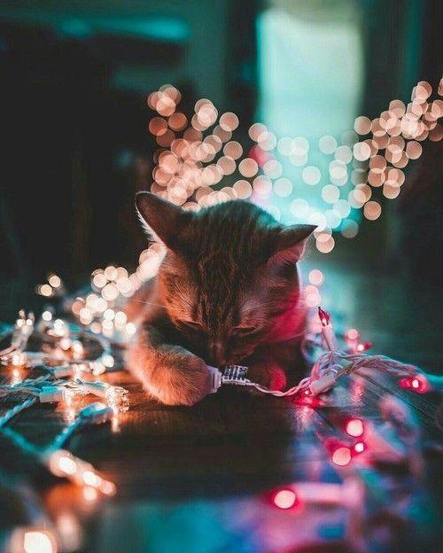 cat, light, and christmas-bilde
