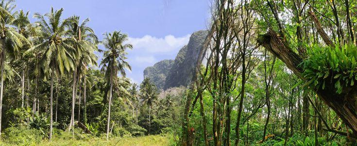 Aloha Kauai Tours - Four Wheel Drive and Hiking Adventure - Hawaii Discount