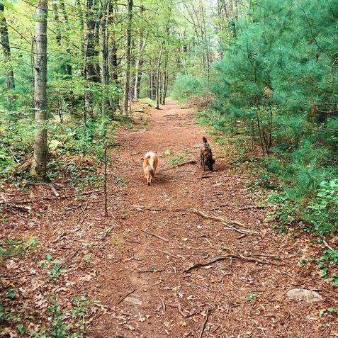 Dog Parks In Brookline Massachusetts