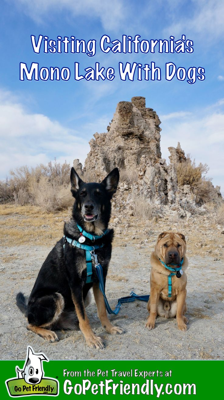 Visiting Californias Mono Lake With Dogs