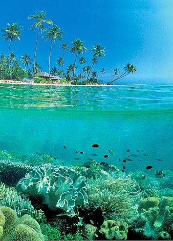 """Daily Destination: Wakatobi, Sulawesi Indonesia. """"Probably the finest diving site in the world,"""" Jacques Cousteau is reported to have said about Indonesia's paradise islands."""