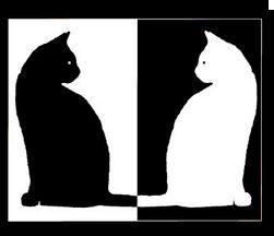 white and black cats
