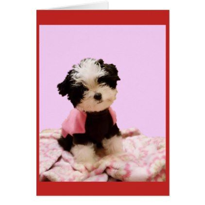 Fluffy Puppy Valentines Day Card