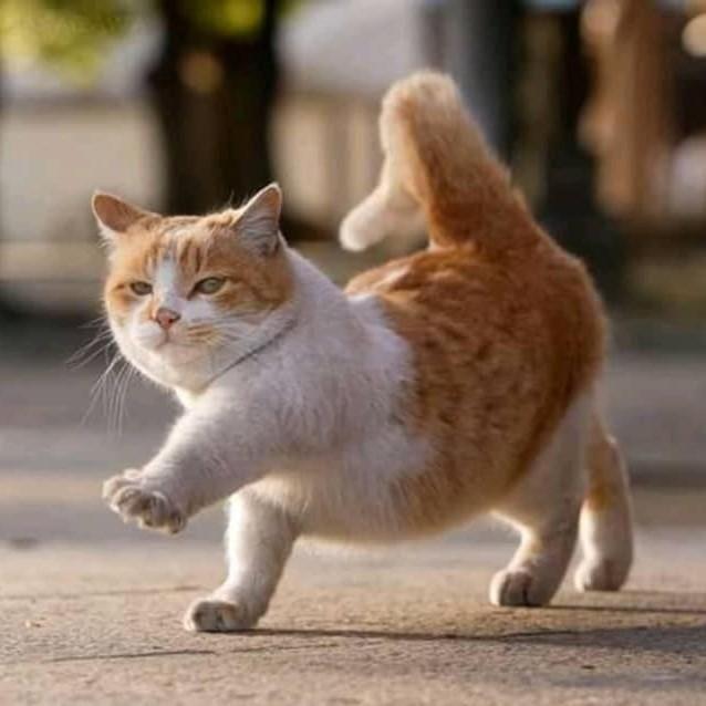 Lovely Short Legs Cats Catlover Catlovers Catsofig Catstagram Kitty Munchkin Cat Cat Noises Cat Website
