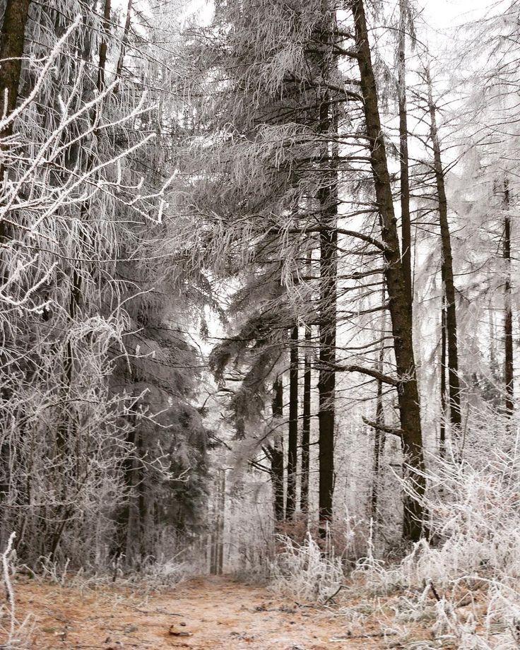 #friends #walking #winter #snow #newyear #naturelovers #klubkocestuje Mrzne až praští!A kouzlí se nám červené tváře!☁️🌨❄️