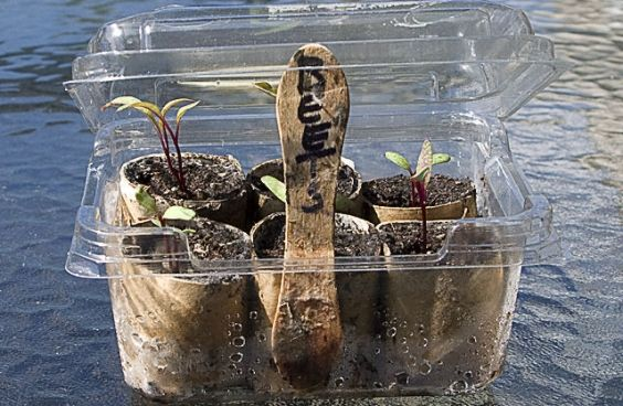 Semenzai: come costruire in 10 mosse una mini serra dai rifiuti