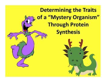 In this lab, you will be creating a 'mystery organism'. You must determine which proteins will be made to produce your mystery organism. You will be simulating the process of protein synthesis to determine the traits this organism will inherit. Your mystery organism belongs to the Animal Kingdom. If is made up of 6 different genes (A, B, C, D, E, and F). Each of these genes is responsible for a certain trait.