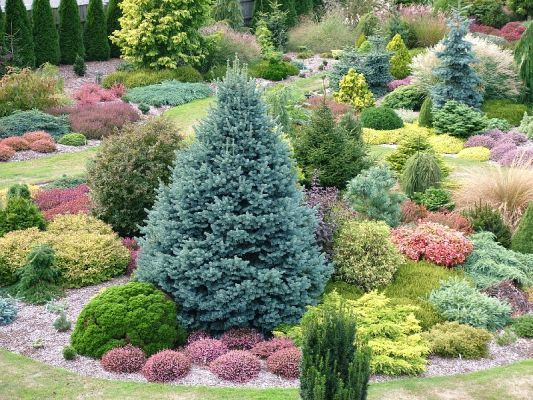 British Conifer Garden- includes Heather and Ericas whose flowers add the purples and pinks.