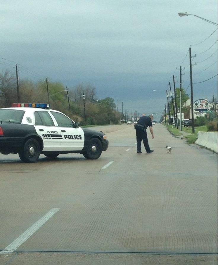 Police officer Kyle Jones of La Porte, Texas, shut down a highway on a rainy day to help a small dog find its way home.