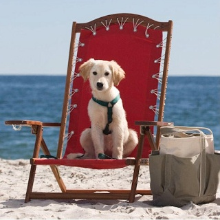 The Inn By Sea In Maine Is A Dog Friendly Resort Where Even Your Can Get Room Doggy Spa Services