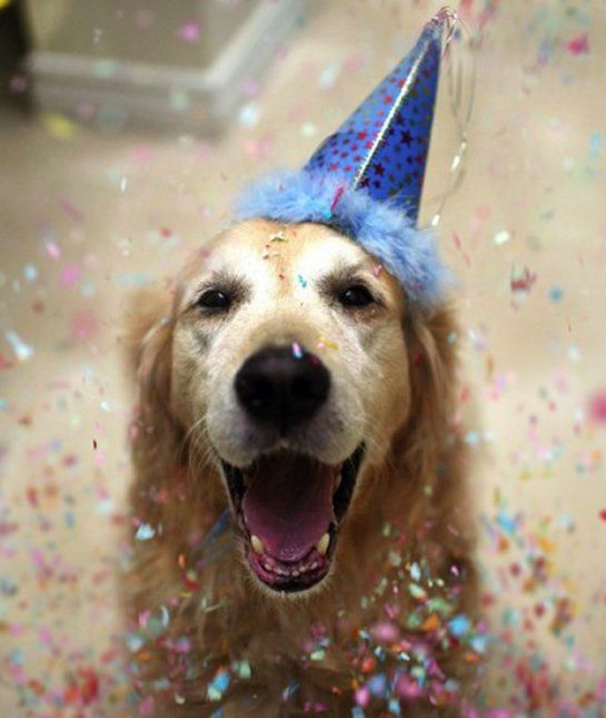 23 Birthday Dogs at Their Parties - Dogs Tips & Advice | mom.me