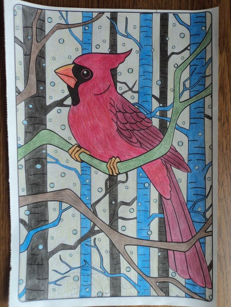 Finished Adult Coloring Book Page Nature Cardinal Birds Colored Pencil Picture