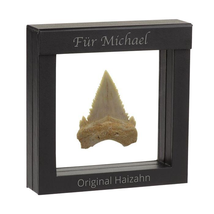 50 Millionen Jahre alt ist dieser versteinerte Originalzahn vom Hai der Art Otodus obliquus. Ein fossiles Souvenir eines der gefährlichsten Meerestiere. Besonders in Szene gesetzt im schwarzen Geschenketui mit Ihrer individuellen Personalisierung. Ein Fossiler Hai-Zahn im Schweberahmen als originelle Geschenkidee.