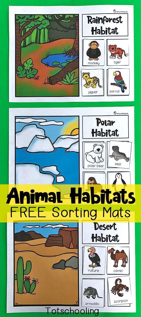 25 best animal categories ideas on pinterest sorting activities