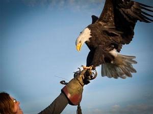 Super gaaf! Vliegen met roofvogels - De Valkerij Manege