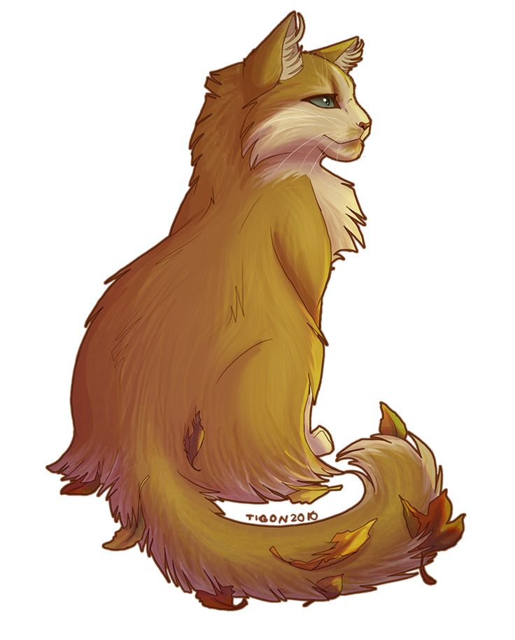 Lionheart : ThunderClan : strong loyal deputy : greypaws mentor very kind : died in battle with ShadowClan hidden by Tigerclaw 8#