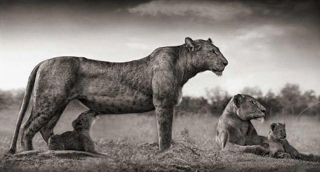 África en blanco y negro