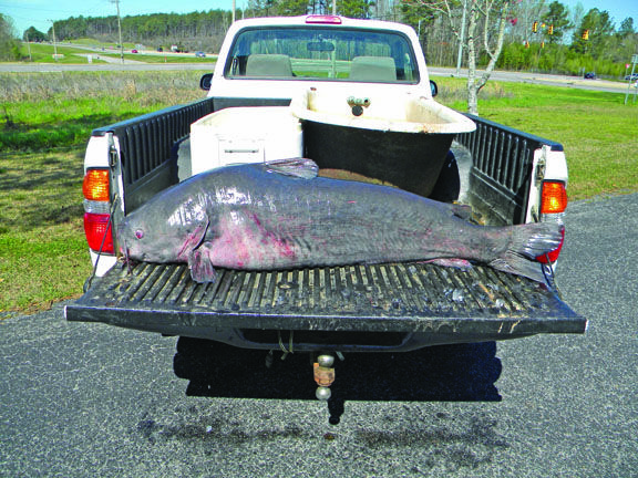 John nichols breaks alabama blue catfish record with this for Blue cat fishing