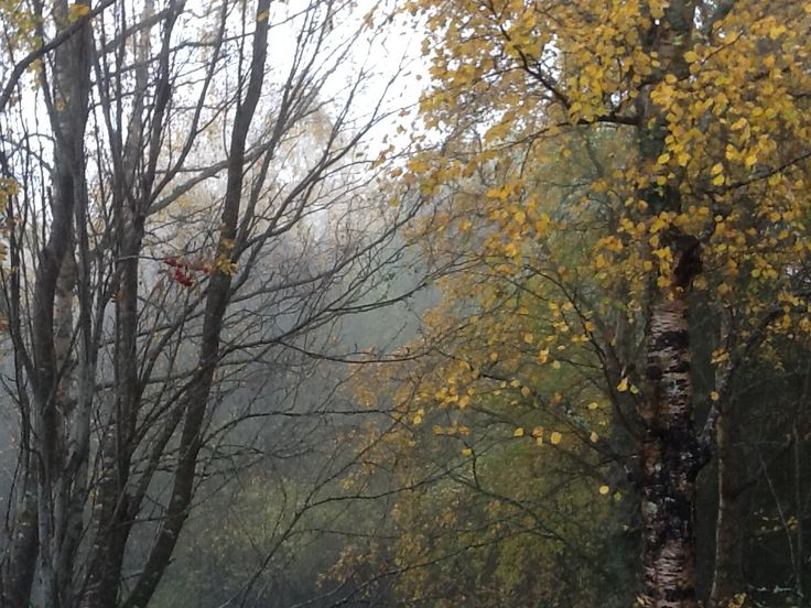 Fog in Dragvoll
