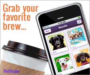Grab your favorite brew…and search adoptable pets with our free iPhone app!