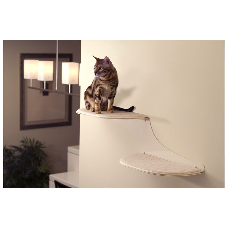 34 Best Pin2win Images On Pinterest Cat Furniture Cat