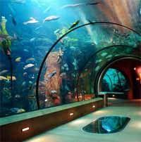 Newport Aquarium ( Northern Kentucky across the Ohio River from Cincinnati ).  God Bless Kentucky.