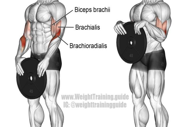 Weight plate reverse curl exercise