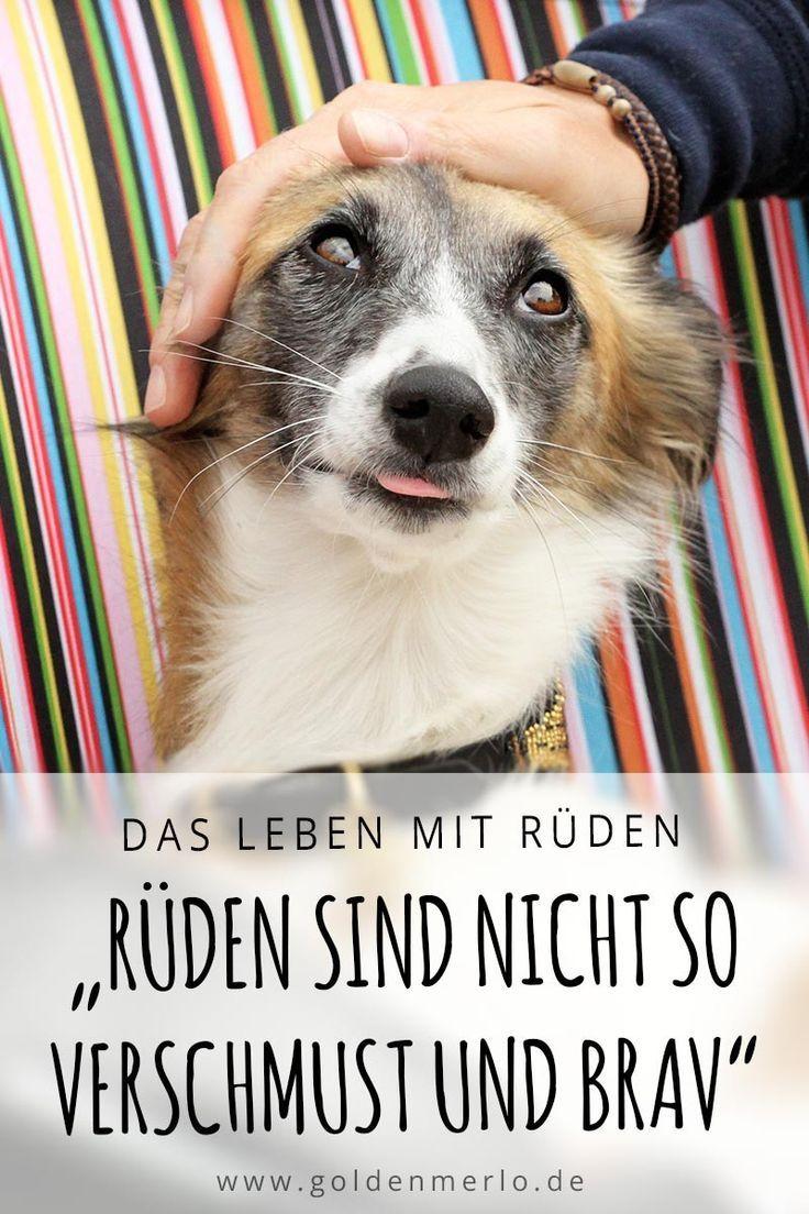 Ruden Sind Nicht So Verschmust Und Anhanglich Wie Hundinnen Ist Ein Haufiges Vorurteil Und Grund Lieber Gleich Eine Hun Hunde Hunde Zu Kaufen Hundeverhalten