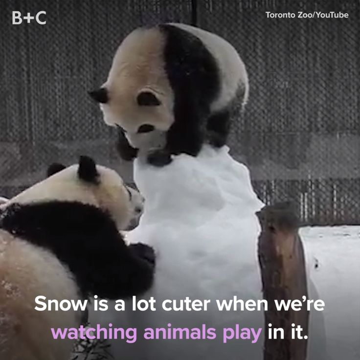 Animals love the snow too!