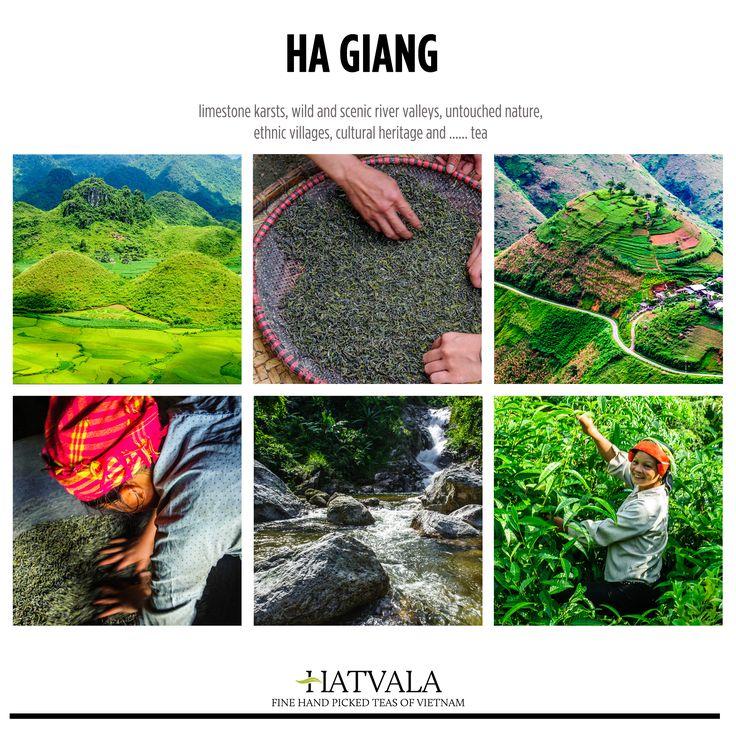 Best Tea Stuff Images On Pinterest Vietnam Map Vietnam And A - Map of teas
