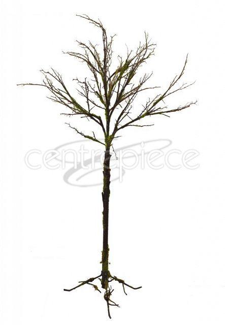 Tree Moss Covered W/Feet 1300cm