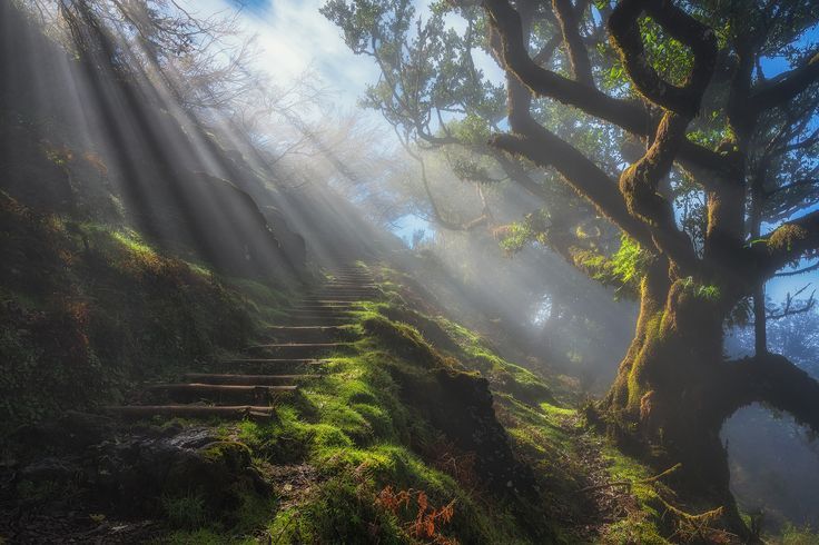 https://flic.kr/p/T3mgzQ | Laurisilva Lights | The laurel forest in Madeira is magical. There are moments in the landscape, the drama goes very fast. Just like here in this example. The fog disappeared through the sun in less than a minute.