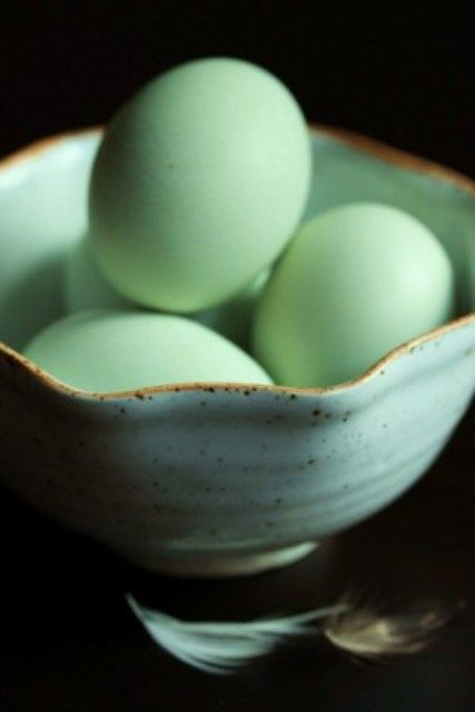 Google Image Result for http://onevanillabean.files.wordpress.com/2010/02/araucana-eggs2.jpg%3Fw%3D427
