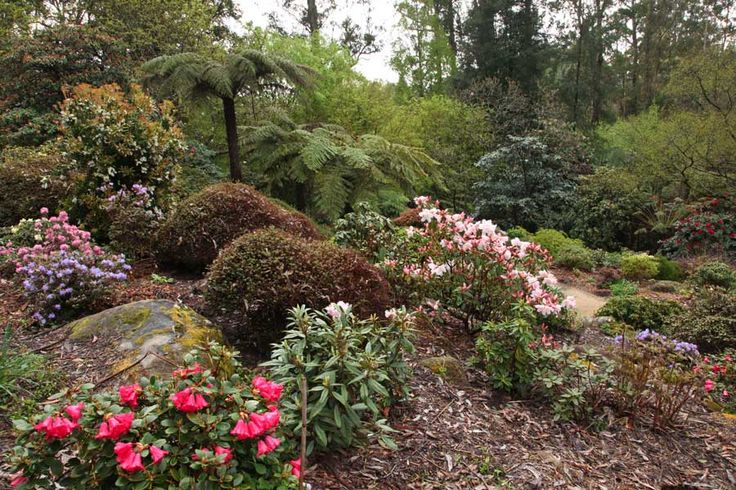 Rockery with rhododendron ciliicaylx